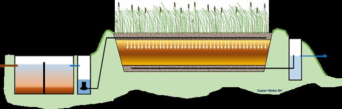 Een schematische uitwerking van een Helofytenveld